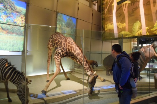 Inside Museum of Natural History 3
