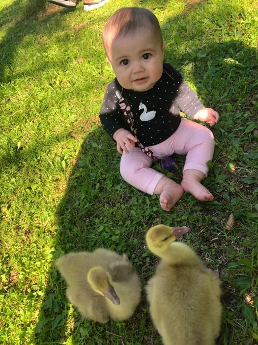 Buff Goose Baby 8